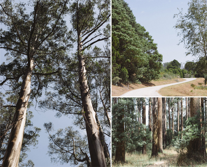 130209_YarraValley-Collage-6