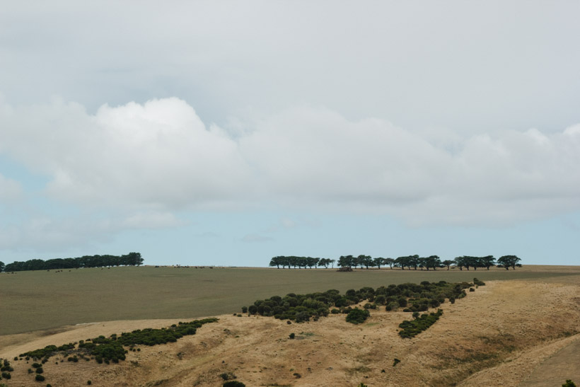 140216_MorningtonPeninsula-92