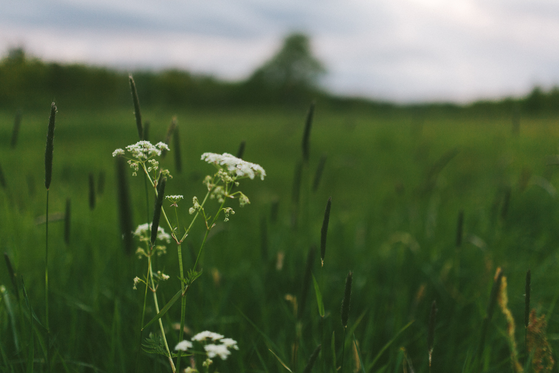 In-the-meadow-and-forrrest-3